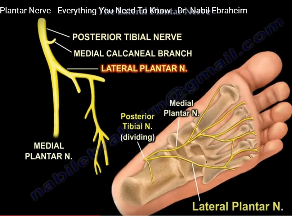 lateral-plantar-nerve