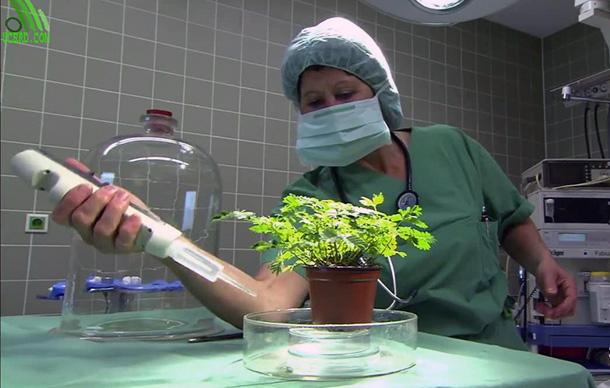 Изпитват ли болка растенията?
