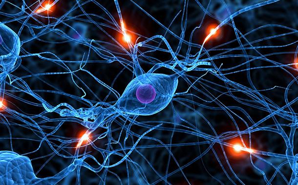 Когато учим мозъкът нараства за часове