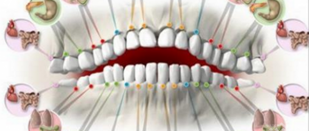 Всеки един зъб е свързан с орган в тялото!