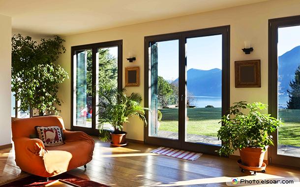 Растенията, пречистващи въздуха в дома и офиса