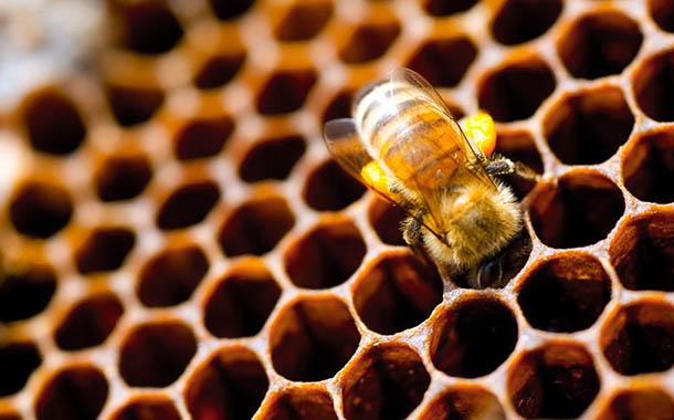 Защо пчелите строят в шестоъгълни структури?