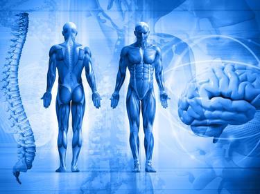 Колко килограма бактерии живеят в телата ни?