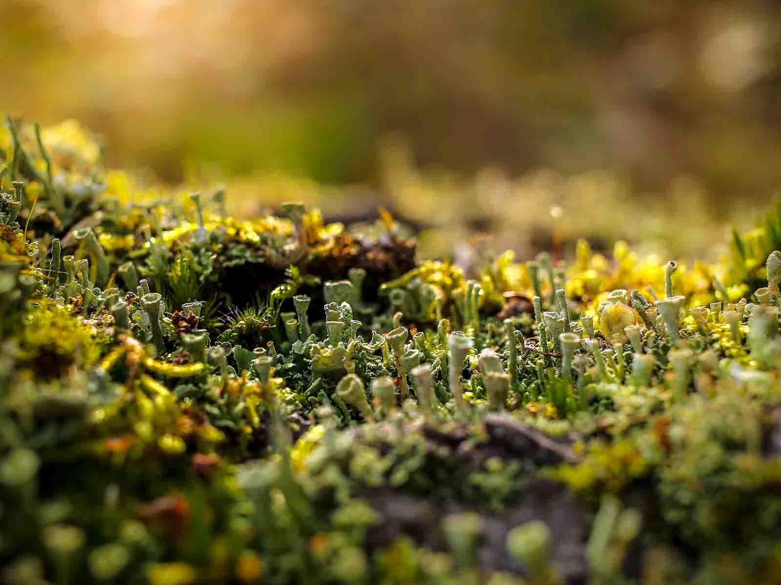 Растенията комуникират помежду си с обща неврална мрежа