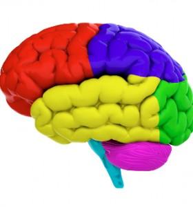 Малък мозък – премерени и синхронизирани движения. Популярно за човешкото тяло.